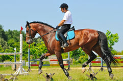 Cavaletti work. The schooling of horse Stock Photo