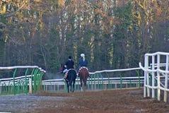 Cavalier arrière de deux chevaux en temps froid Images stock