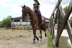 cavalier de cheval, concours image stock