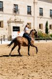 Cavalier de cheval de femme montant un cheval andalou brun dans le RO historique Image libre de droits