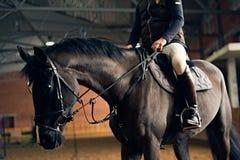 Cavalier de cheval sur un cheval dans une arène d'équitation Image libre de droits