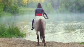 Cavalier de fille montant un cheval hors de l'eau dans le brouillard pendant le début de la matinée banque de vidéos