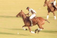 Cavalier de polo Image stock