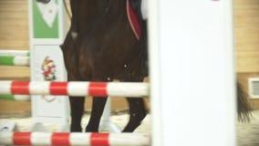 Cavalier exécutant galoper sur le cheval de baie, au ralenti banque de vidéos