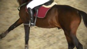Cavalier exécutant galoper sur le cheval de baie, vue supérieure clips vidéos