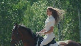 Cavalier féminin dans la selle Le cheval va passage Galoper de cheval banque de vidéos