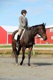 Cavalier féminin sur le cheval de Brown en automne Photos stock