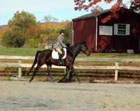 Cavalier féminin sur le cheval de Brown en automne Images libres de droits