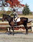 Cavalier féminin sur le cheval de Brown en automne Photographie stock