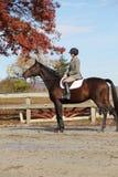 Cavalier féminin sur le cheval de Brown en automne Image libre de droits