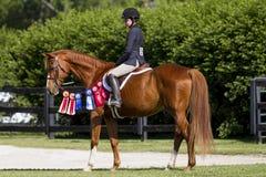 Cavalier fier sur son cheval de châtaigne Photos libres de droits