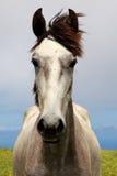 Cavalier gai de verticale de cheval blanc Photo libre de droits