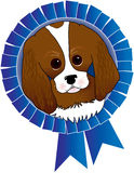 Cavalier King Charles Spaniel. With a blue ribbon Stock Images
