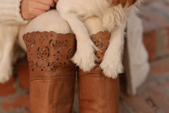 Cavalier King Charles Spaniel dog puppy paws on a woman's lap and boots. Beautiful dog Cavalier King Charles Spaniel, white with red-brown spots on the fur, is stock images