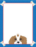 Cavalier King Charles Spaniel Frame Royalty Free Stock Image