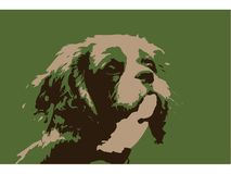 Cavalier King Charles Spaniel Illustration Royalty Free Stock Images