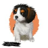 Cavalier king Charles spaniel puppy digital art illustration. Cavalier king Charles spaniel puppy breed lap toy dog originated in United Kingdom. Domestic animal vector illustration