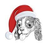 Cavalier King Charles Spaniel wears Christmas holiday hat. Santa dog portrait isolated on white background royalty free illustration