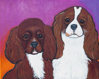 Cavalier King Charles Spaniels Royalty Free Stock Image