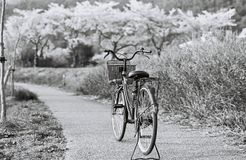Cavalier noir et blanc Photos libres de droits