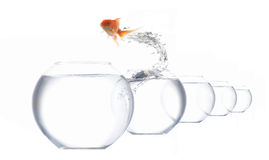 Cavalier-poissons Photo stock