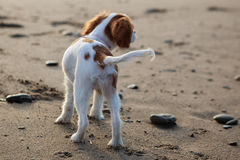 Cavalier sur la plage images stock