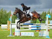 Cavalier sur le cheval de baie dans les sports sautant l'exposition Photographie stock libre de droits