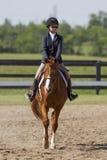 Cavalier sur un cheval de châtaigne Photographie stock libre de droits