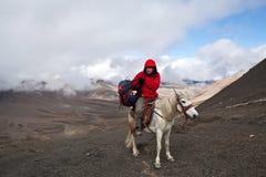 Cavaliere al passaggio Fotografia Stock