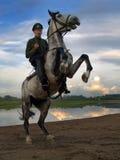 Cavaliere al tramonto fotografia stock