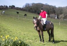Cavaliere bello del cavallo maschio a cavallo con le culatte bianche, gli stivali neri e la camicia di polo rossa nel campo verde Fotografie Stock
