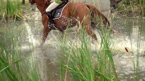 Cavaliere con acqua dell'incrocio del cavallo stock footage