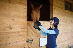 Cavaliere con un cavallo Fotografia Stock