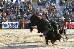 Cavaliere del Bull Immagine Stock