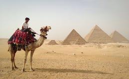 Cavaliere del cammello Immagini Stock
