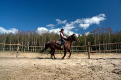 Cavaliere del cavallo Immagine Stock