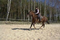 Cavaliere del cavallo Fotografia Stock Libera da Diritti