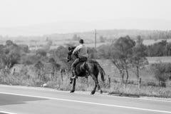Cavaliere del cavallo Fotografie Stock