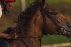 Cavaliere del cavallo da corsa Fotografie Stock
