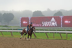 Cavaliere del cavallo di esercizio, Saratoga Springs, NY, Tom Wurl Immagine Stock