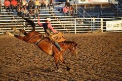 Cavaliere del cavallo di urtare Fotografie Stock
