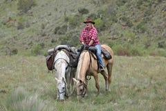 Cavaliere del cavallo femminile immagini stock libere da diritti