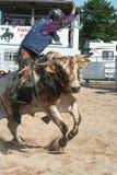 Cavaliere del toro Immagini Stock Libere da Diritti