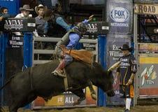 Cavaliere del toro del rodeo Fotografia Stock