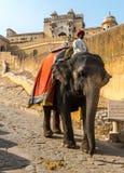 Cavaliere dell'elefante Immagine Stock