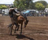 Cavaliere di rodeo Fotografia Stock