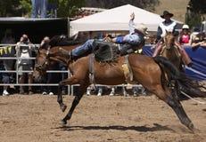 Cavaliere di rodeo Fotografie Stock Libere da Diritti