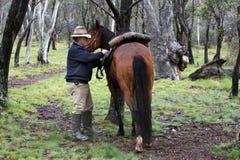 Cavaliere e cavallo Immagini Stock Libere da Diritti