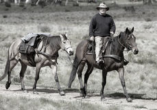 Cavaliere e cavallo Fotografia Stock Libera da Diritti