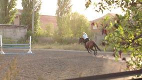 Cavaliere professionale della ragazza che galoppa su un cavallo video d archivio
